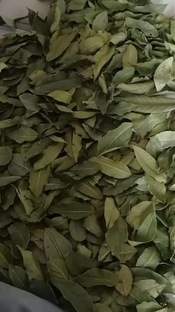 High Quality Laural Leaves